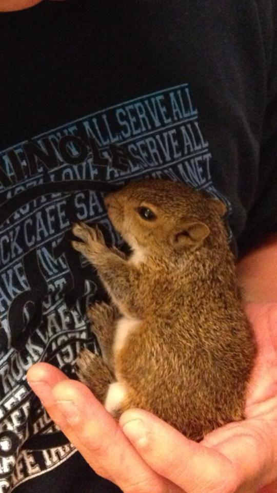 Man Finds Baby Squirrel In Bag Of Mulch, And It Grows Up To Be The Most Adorable Pet