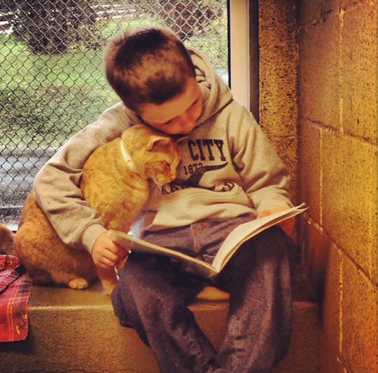 Children Are Reading To Cats To Calm Shy Shelter Animals And The Cats Love It