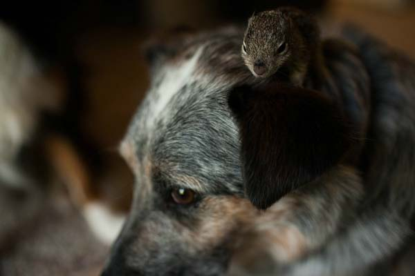 Man And His Dogs Save A Frozen Baby Squirrel