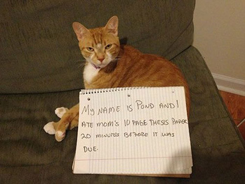 27 Jerk Cats Being Shamed For Their Crimes