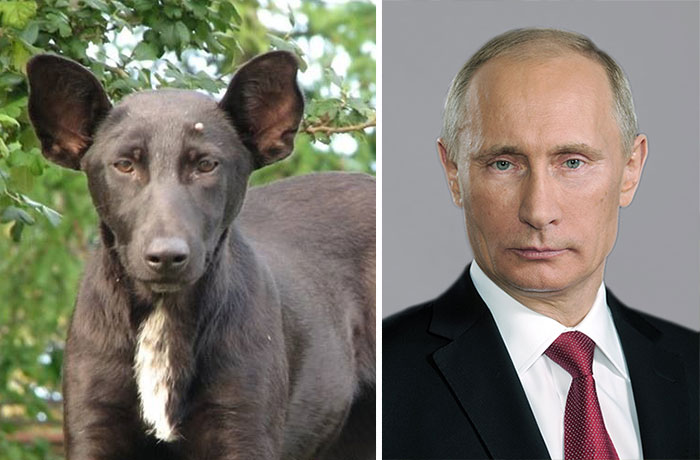 15 Dogs That Look Exactly Like Something Else