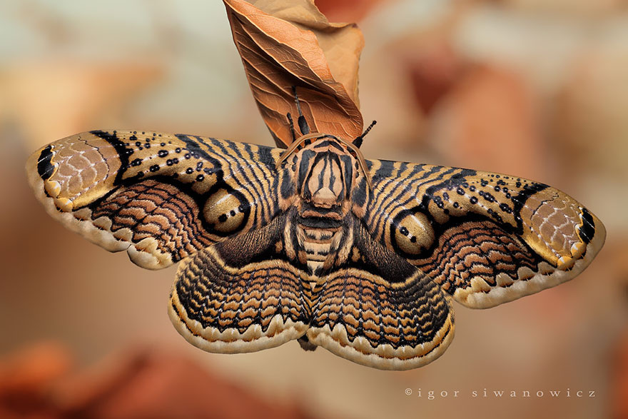 19 Beautiful Before And After Photos Of Butterfly And Moth Transformations