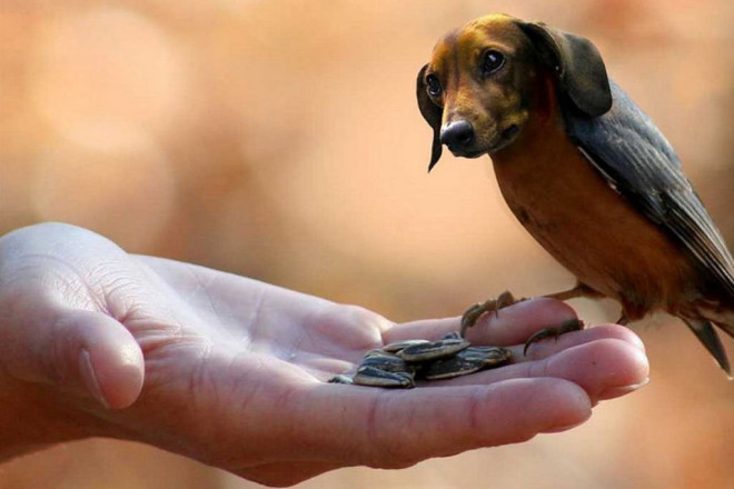 Guy Makes Unexpected Animal Hybrids In Photoshop That Would Be Weird In Real Life (25 Pics)