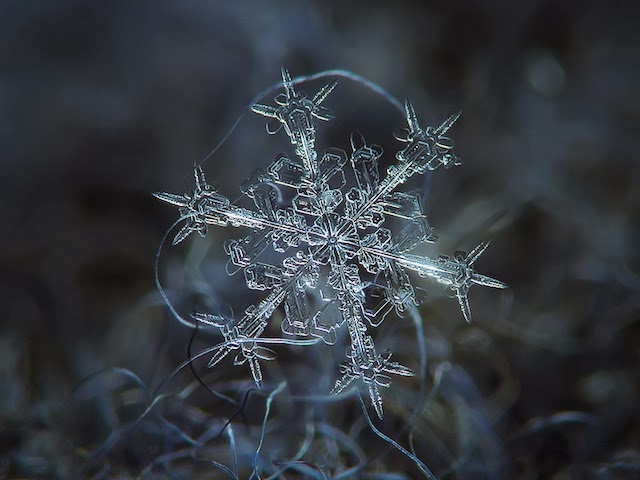 10 Close-Up Photos Of Snowflakes Show No Two Snowflakes Are Alike