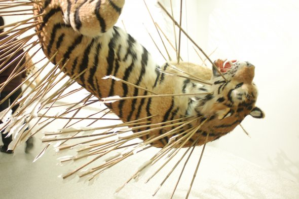 Man Turns His Taxidermy Into Bizarre Art