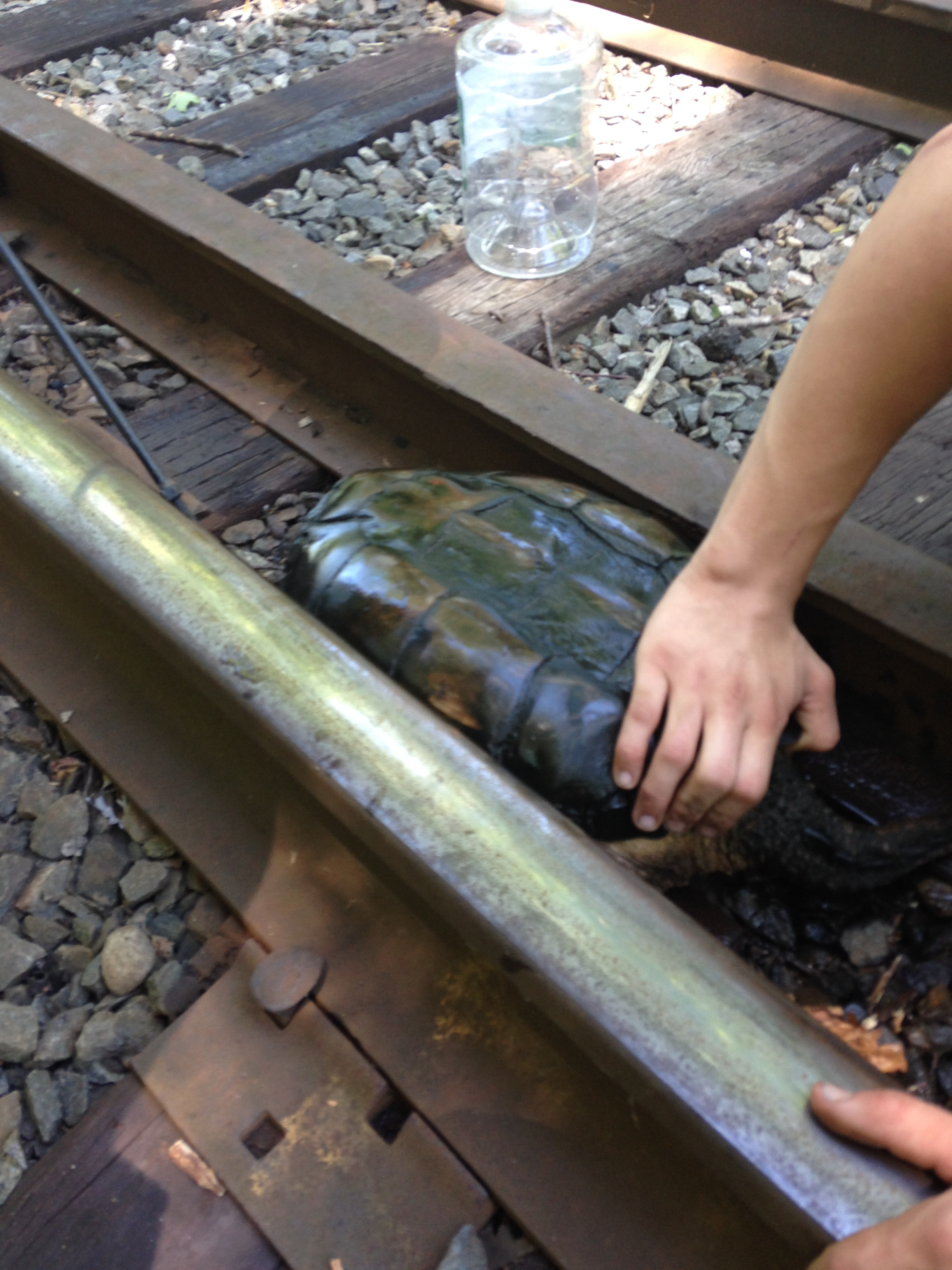 Turtle Trapped On Train Tracks Rescued In The Nick Of Time