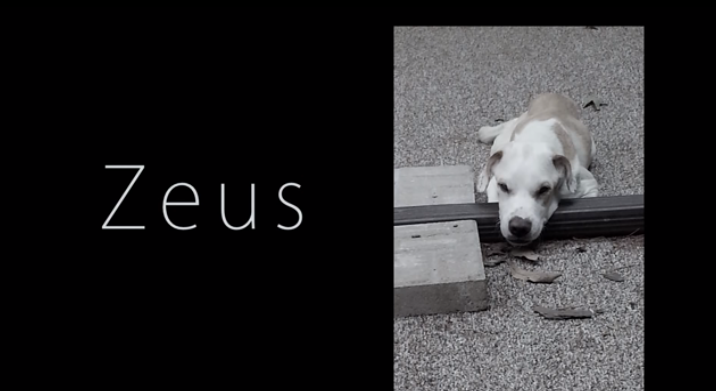 The Journey Of Zeus The Dog Will Remind You That We All Deserve 2nd Chances