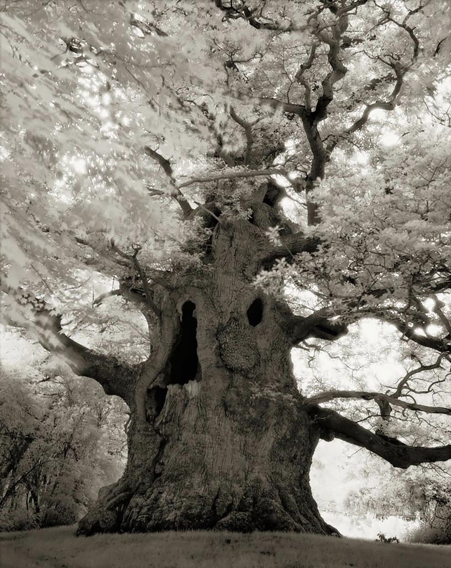 Woman Spends 14 Years Photographing World's Oldest Trees (20 Pics)