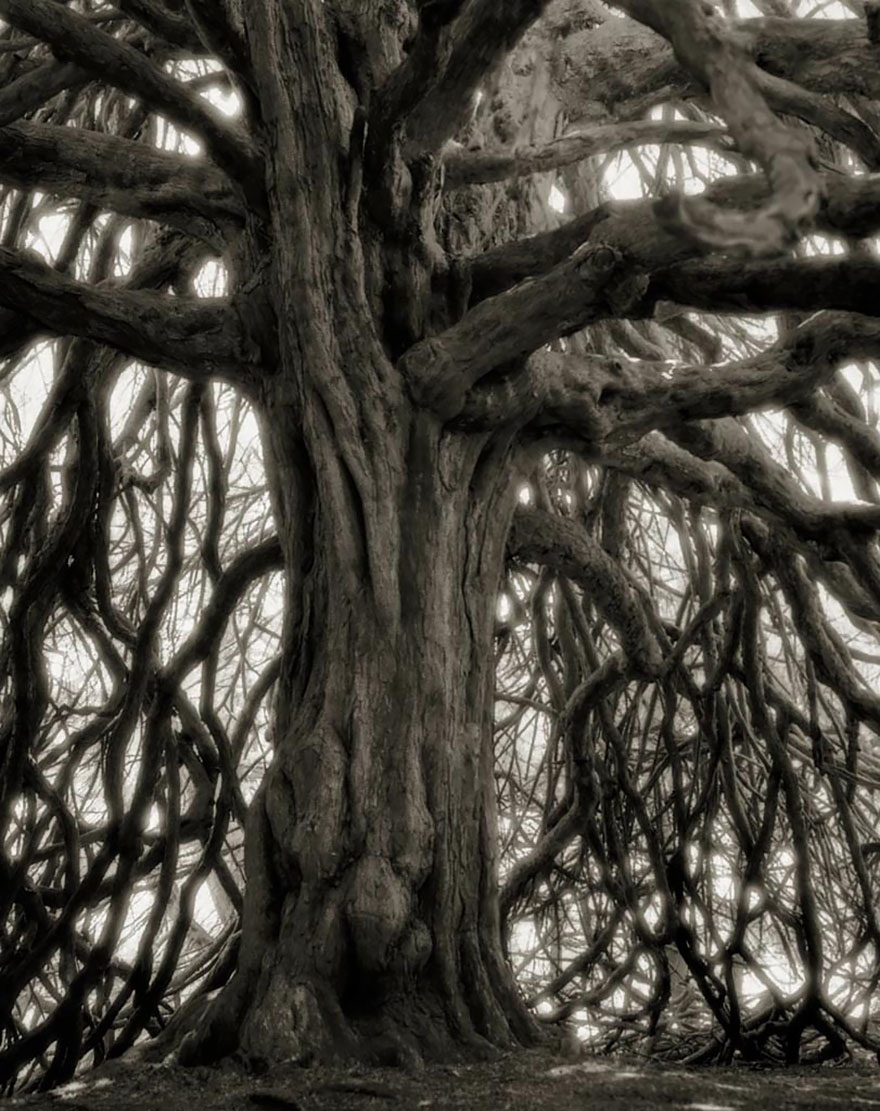 Woman Spends 14 Years Photographing World's Oldest Trees