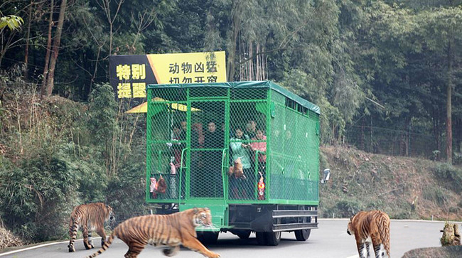 This Zoo Locks People In Cages Instead Of Animals