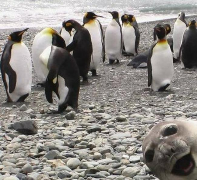 32 Off The Best Photobombs Ever Taken
