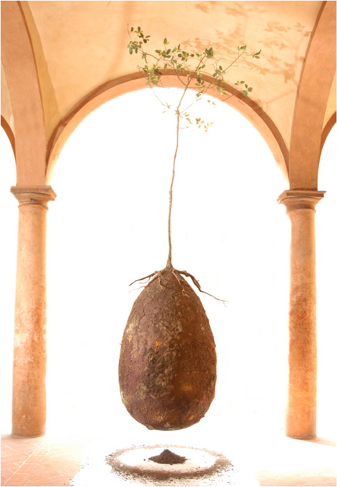 Forget Coffins! These Organic Burial Pods Will Turn You Into A Tree When You Die