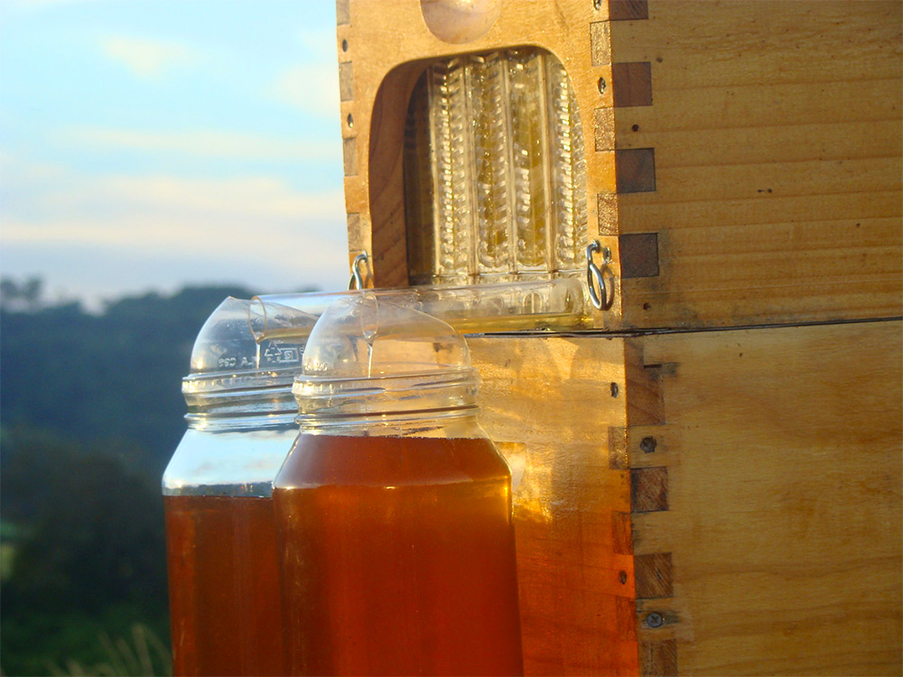 You Can Harvest Honey Automatically Without Disturbing The Bees