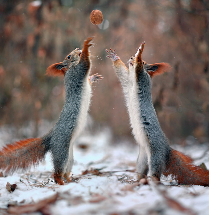 Photographer Captures The Cutest Squirrel Photo Session Ever