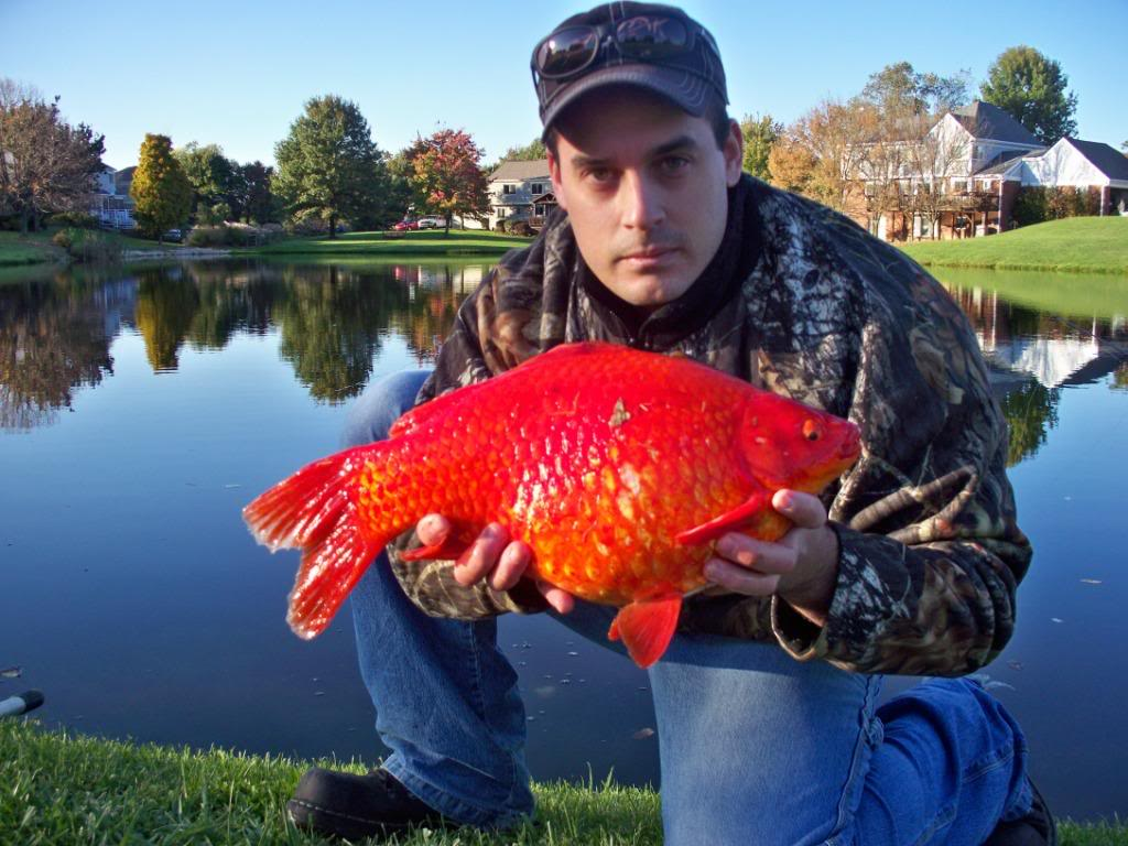 This Is Why You Should Never Release Your Pet Goldfish Into The Wild Or Flush Them Down The Toilet