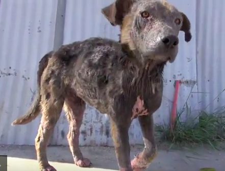 Dog Found Moments From Death Is Rescued From Streets And Gifted The Life She Deserves