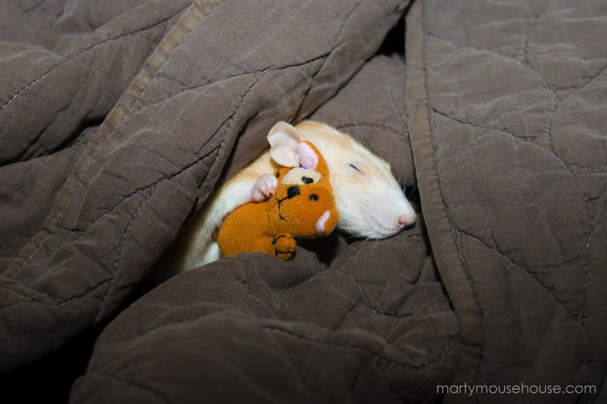 25 Reasons Why Rats Can Be The Best Pet Ever