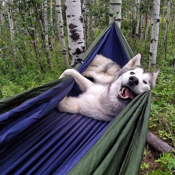 These Photos Of People Camping With Their Dogs Will Inspire You To Go Hiking With Your Dog
