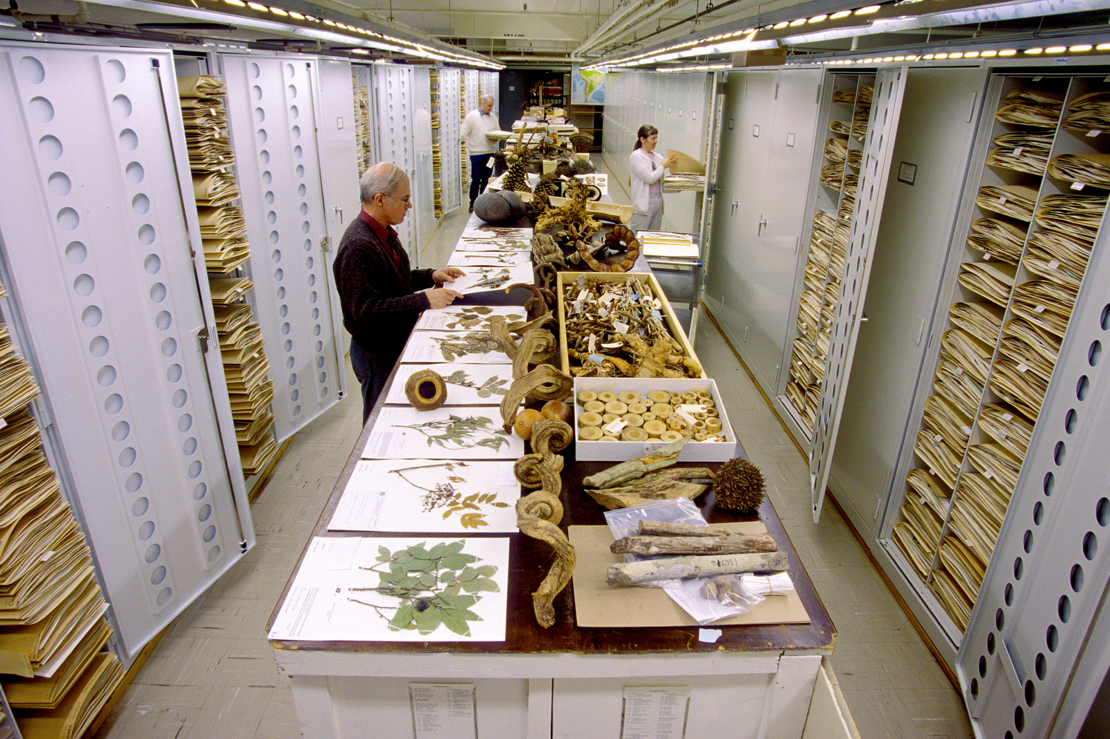 Inside The Secret Collections At The US Museum of Natural History (12 Pics)