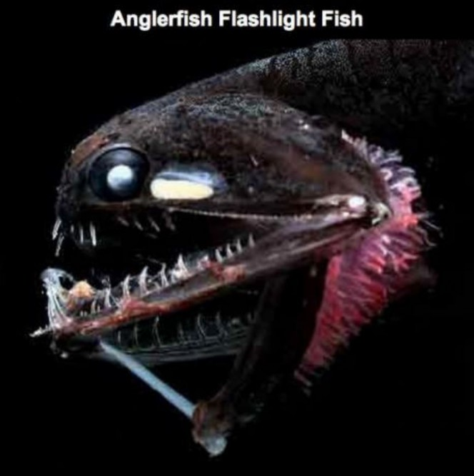 17 Terrifying Creatures Found In The Deepest Depths Of Our Planet, The Mariana Trench