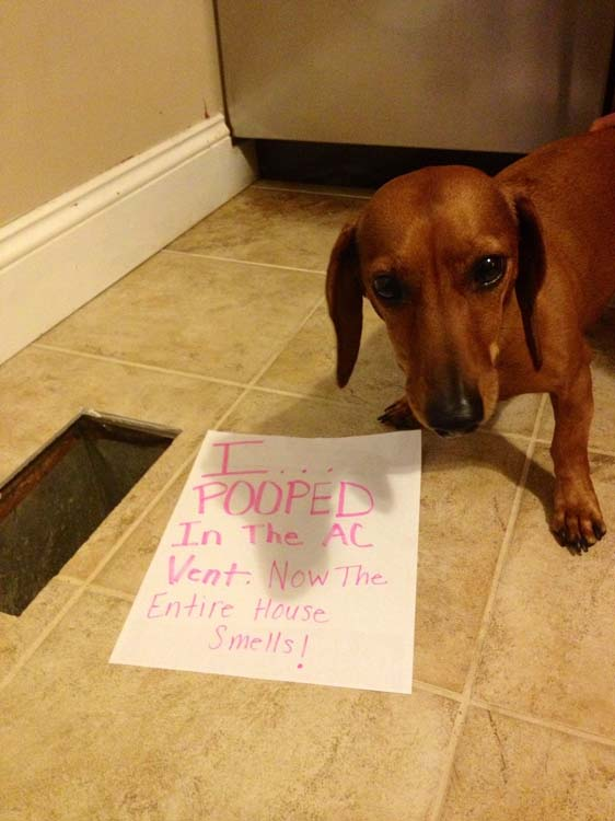 27 Of The Naughtiest Dogs Ever