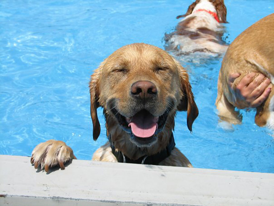 There Is A Dog Daycare That Throws Pool 'Pawties' For Their Dogs In Their Bone-Shaped Pool