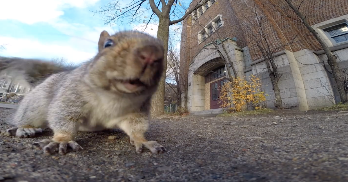 Squirrel Steals GoPro Camera And Takes Us On A Beautiful Tour Of The Trees