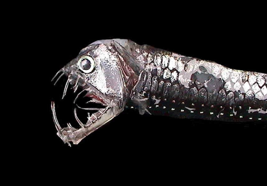 17 Of The Most Terrifying Fish You'll Ever Find In The Ocean