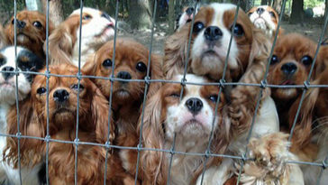 Volunteers Save 108 Abused Dogs From Breeding Farm