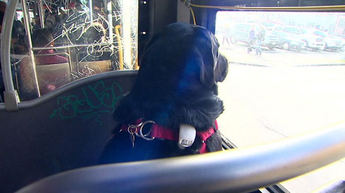 Every Day This Good Girl Rides The Bus All By Herself To Go To The Park