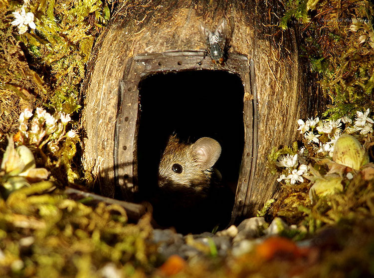 Man Builds Miniature Village For Family Of Mice After He Discovers Them Living In His Garden