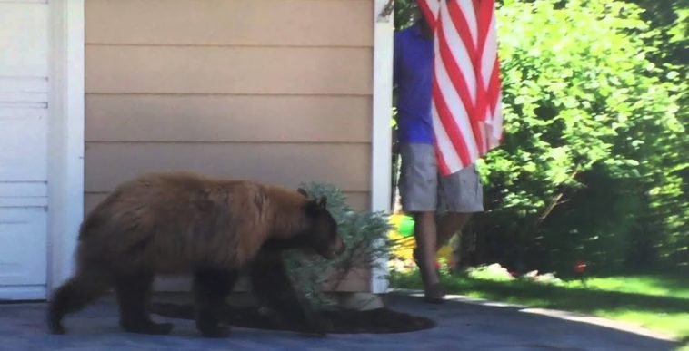Man And Bear Give Each Other A Scare