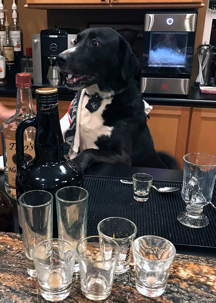 40 Good Dogs Who Have Real Jobs