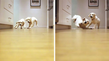 Puppies Grow A Year While Running For Food In 1-Minute Timelapse