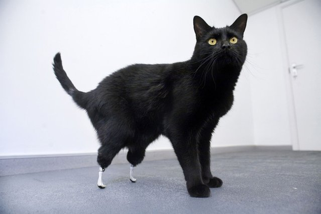 12 Animals Who Lost Their Limbs, But Not Their Spirit