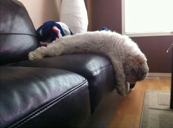 29 Animals Who Clearly Don't Know How To Use Furniture