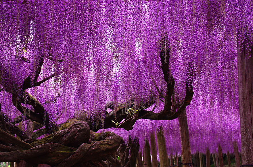 16 Of The Most Beautiful Trees In The World