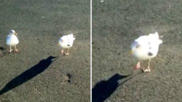 Man Trains Seagull To Dance On Command