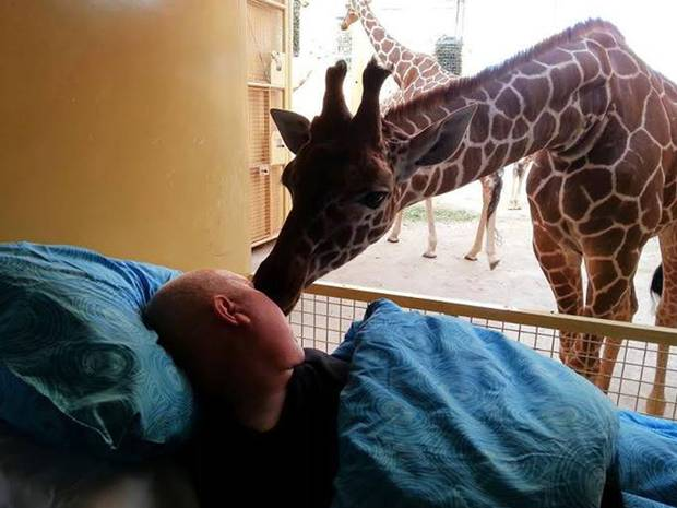 Giraffe Gives Dying Zoo Keeper Final Kiss Goodbye