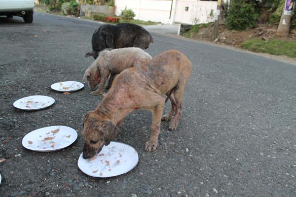 Man Decides To Follow Son On His Daily Walk, Finds Him Feeding Stray Dogs