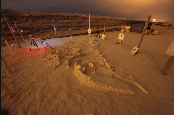 Ancient whale graveyard unearthed by Pan-American Highway project