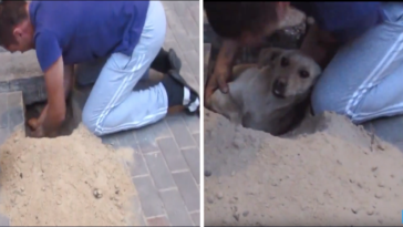 Pregnant Dog Buried Under A Sidewalk For 2 Days Before Being Rescued