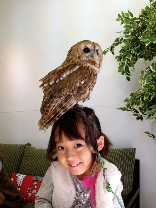 There's A Cafe In Japan Where You Can Enjoy A Meal With Owls