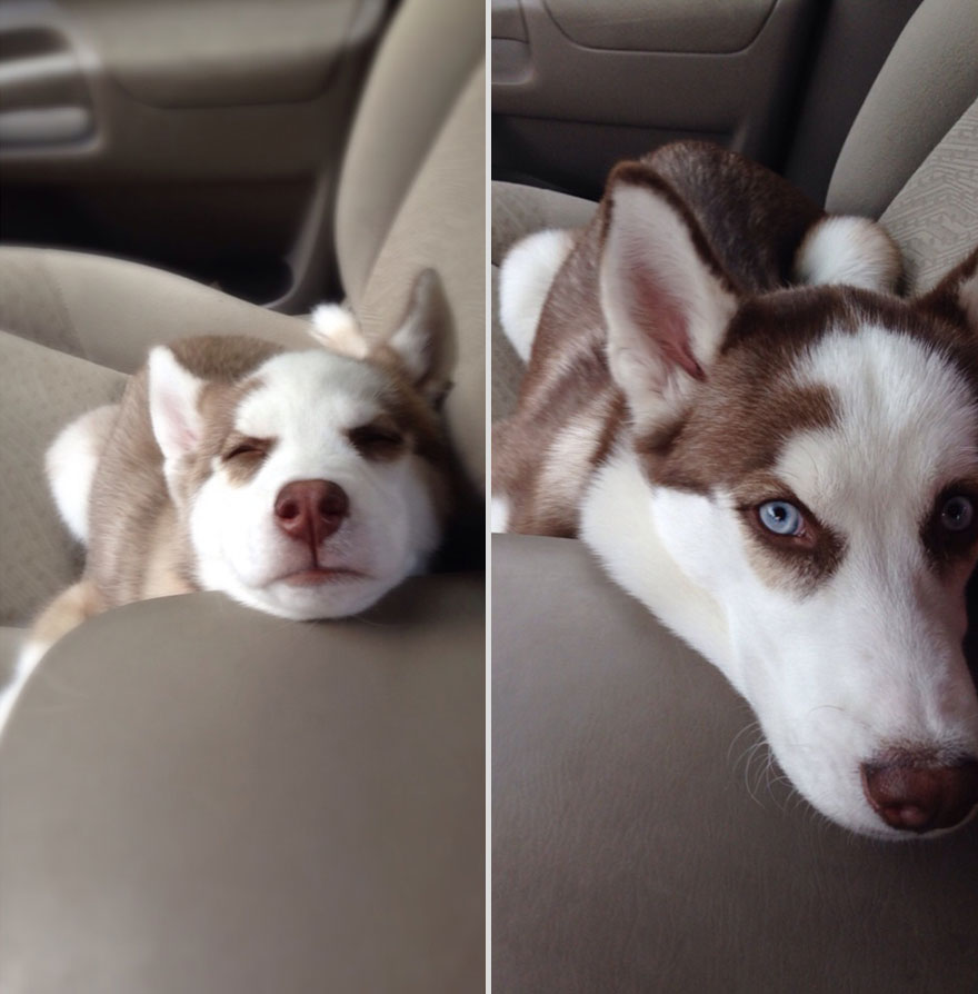 22 Adorable Before And After Photos Of Pets Growing Up