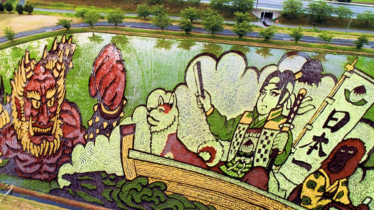 Farmers Are Planting Specific Strains Of Rice To Grow Colorfully Illustrated Fields