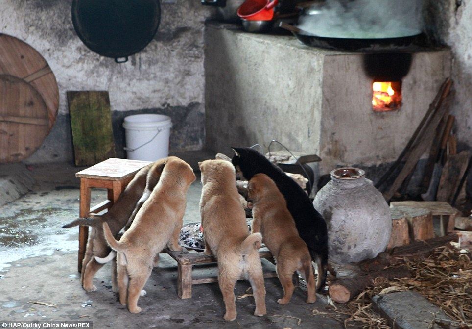 On Cold Days, These Freezing Puppies Gather Around Stove And Bark Non-Stop Until Someone Lights It