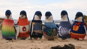 Oldest Person In Australia Likes To Knit Mini Sweaters For Injured Penguins