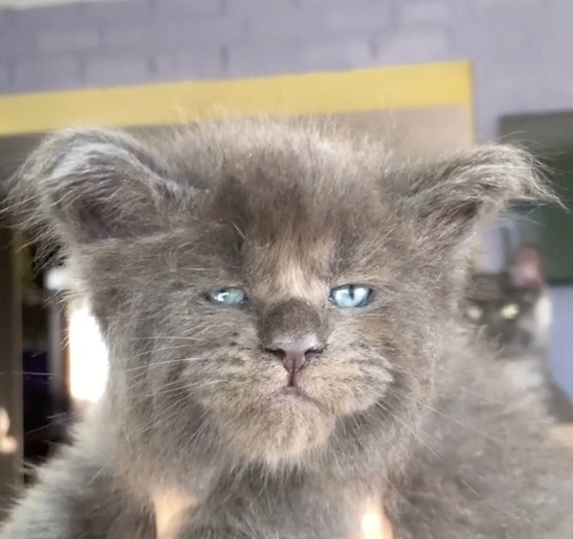 Entire Litter Of 5 Kittens Was Born With Grumpy But Cute Faces