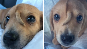 Abandoned Rescue Puppy Has A Tail Growing Out Of His Forehead