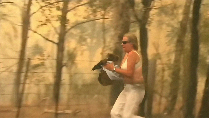 Woman Saves Screaming And Scorched Koala With The Shirt Off Her Own Back